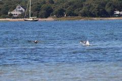 Vue de plage de l'eau Image stock
