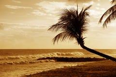 Vue de plage tropicale gentille avec la paume sur le coucher du soleil image libre de droits
