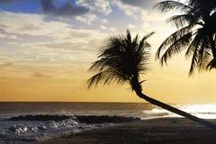 Vue de plage tropicale gentille avec la paume sur le coucher du soleil photo stock