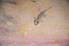 Vue de plan rapproché d'un gecko se reposant sur un mur photo libre de droits