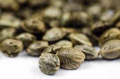 Vue de plan rapproché de détail des graines médicales de marijuana Images stock