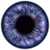 Vue de plan rapproché de globe oculaire illustration libre de droits