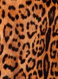 Détail d'une peau de jaguar Photos libres de droits