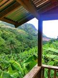 Vue de plantation de banane d'Orocovis, Porto Rico Photos libres de droits