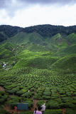 Vue de plantation de thé chez Cameron Highlands, Malaisie photo stock