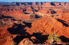 Vue de point de cheval mort - parc national de Canyonlands Photographie stock