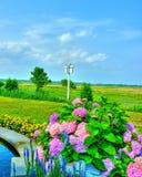 Vue de pré avec les fleurs colorées Photo libre de droits