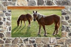 Vue de pré de chevaux d'hublot de mur de maçonnerie en pierre Photos libres de droits