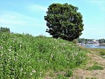 Vue de pré vert d'été sur la côte de la mer baltique en Finlande photos libres de droits