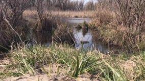 Vue de rivage vers la rivière, journée de printemps clips vidéos