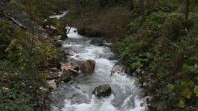 Vue de rivière clips vidéos