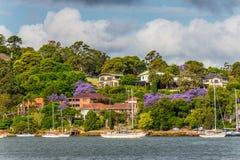 Vue de rivière de Parramatta, maisons de banlieue de Sydney Photographie stock