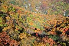 Vue de Ropeway Nikko Japon d'Akechidaira. Image stock