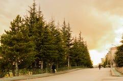Vue de rue avec de vieux pins à Eskisehir, Turquie Photographie stock
