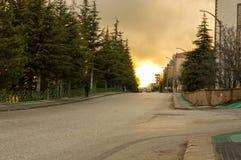 Vue de rue avec de vieux pins à Eskisehir, Turquie Image libre de droits