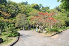 Vue de rue de ville de Jeju en Corée du Sud Photographie stock