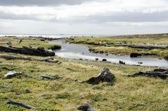 Vue de Seno Otway - Patagonia - le Chili Photo stock