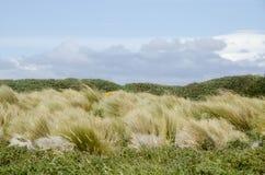 Vue de Seno Otway - Patagonia - le Chili Photographie stock libre de droits