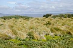 Vue de Seno Otway - Patagonia - le Chili Images libres de droits