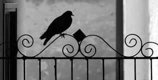 Vue de silhouette de pigeon sur la balustrade de fer travaillé images stock