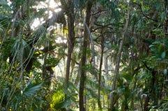 Vue de sous forêt tropicale Images libres de droits