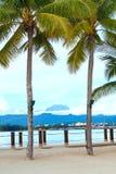 Vue de support Kinabalu entre deux arbres de noix de coco photos stock