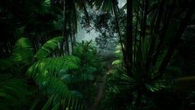 Vue de Timelapse au-dessus d'une belle jungle verte luxuriante rendu 3d Image libre de droits