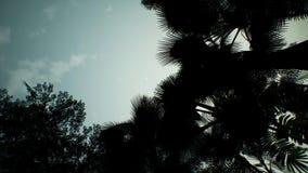 Vue de Timelapse au-dessus d'une belle jungle verte luxuriante rendu 3d Images libres de droits