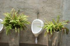 Vue de toilette par des urinoirs, Photos stock