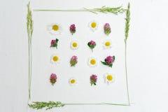 Vue de trèfle et de camomille et d'herbe de champ Images stock