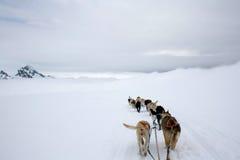 Vue de traîneau de chien sur la neige Photographie stock libre de droits
