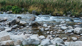 Vue de vallée de Koscielisko dans Tatras polonais Photo stock
