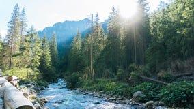 Vue de vallée de Koscielisko dans Tatras polonais Photographie stock libre de droits