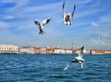 Vue de Venise - mouettes image libre de droits