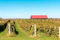 Vue de vignoble et de grange Photo stock