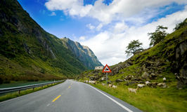 Vue de voyage de véhicule, Norvège. Photo stock