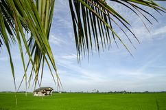 Vue de zone rurale entourant avec le beau gisement de riz non-décortiqué photographie stock libre de droits