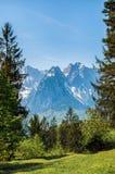 Vue des Alpes par la forêt images stock