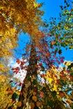 Vue des arbres Photo libre de droits
