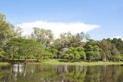 Vue des arbres au lac Photographie stock libre de droits