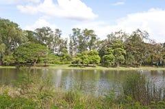 Vue des arbres au lac Photographie stock