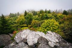 Vue des arbres en brouillard de roche noire, à la montagne première génération, I images stock