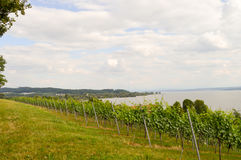 Vue des ceps de vigne dans Uhldingen Photographie stock libre de droits
