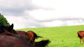 Vue des chevaux de ferme sur le pâturage Plans de gestion de mauvaise herbe pour des pâturages de cheval clips vidéos