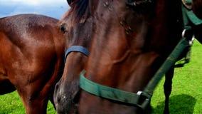 Vue des chevaux de ferme sur le pâturage Plans de gestion de mauvaise herbe pour des pâturages de cheval banque de vidéos