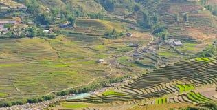 Vue des collectes de riz au Vietnam images stock