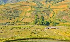 Vue des collectes de riz de vallée verte image libre de droits