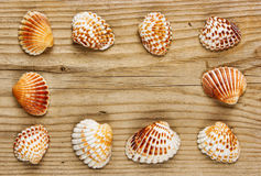 Vue des coquilles de mer sur vieil en bois photographie stock libre de droits