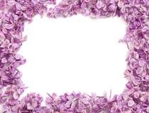 Vue des couleurs d'un lilas Photographie stock