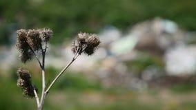 Vue des déchets dans l'herbe par le rappee image libre de droits